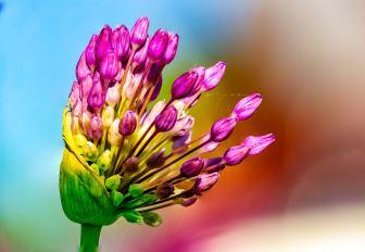 colorfulflower