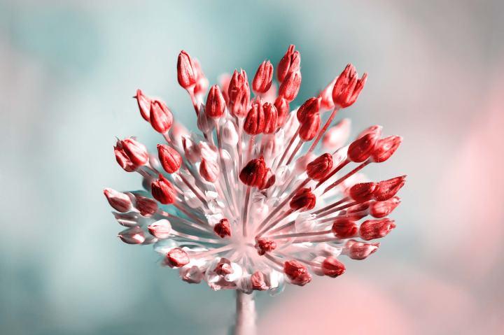 flowerexplosion2strip