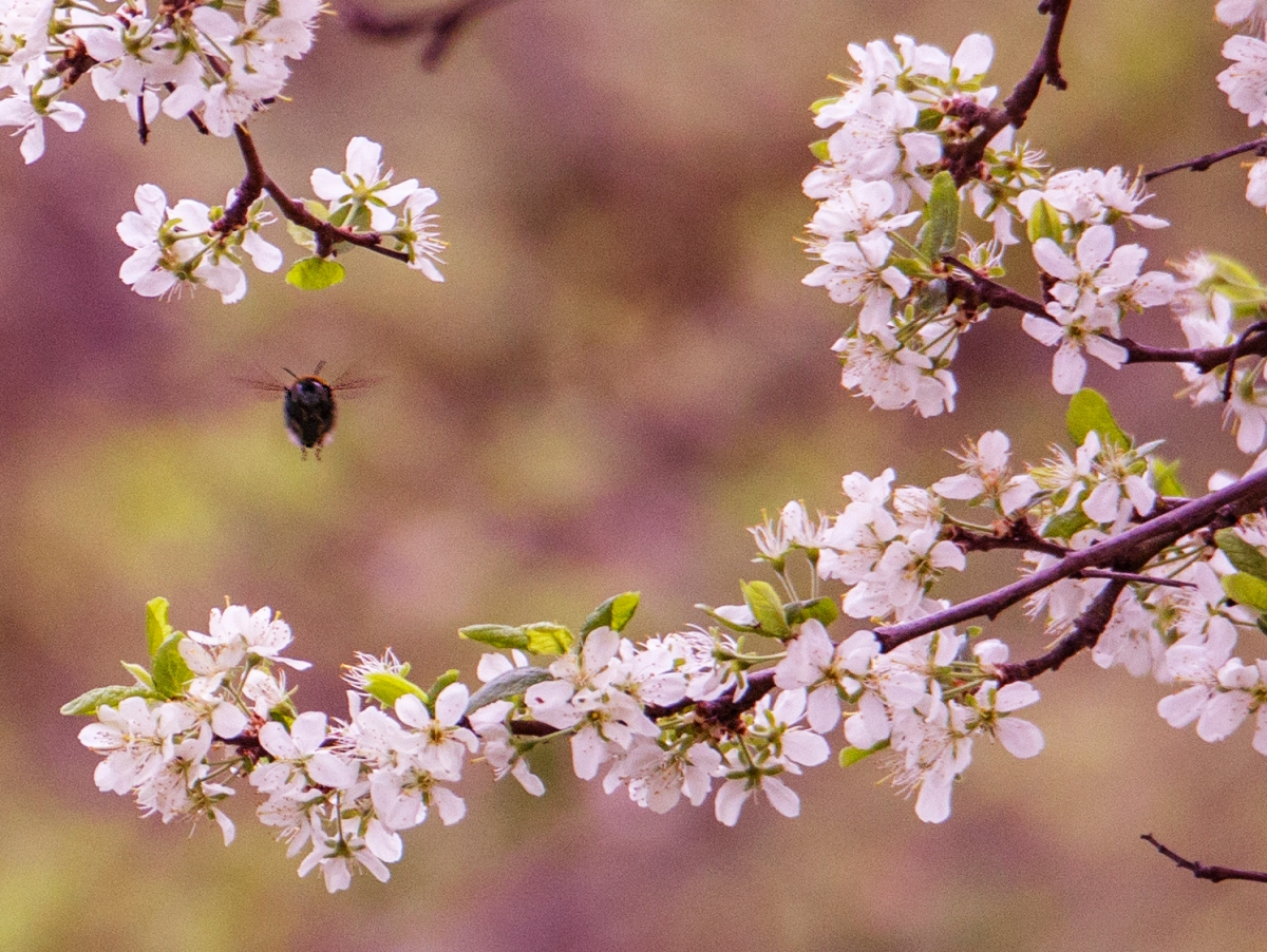 Macrophotography - springflowers