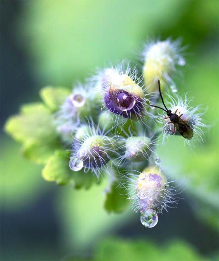 insektdrops