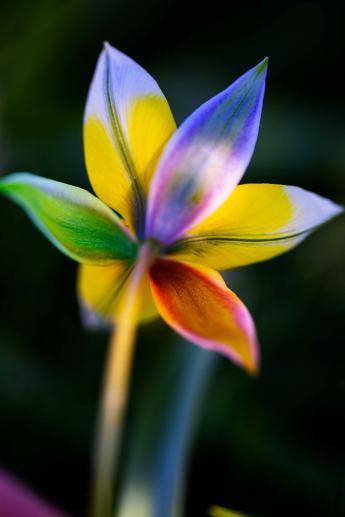 rainbowflower2